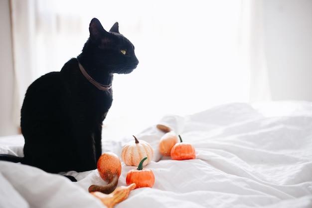 Schwarze katze und kürbisse auf dem bett.