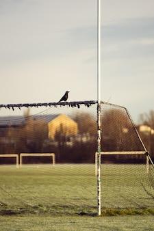 Schwarze krähe auf einem tor in einem gefrorenen fußballfeld in london