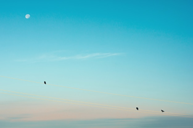 Schwarze krähen sitzen am morgen auf drähten vor dem hintergrund des mondes. silhouetten von raben im mondlicht. minimalistisches bild von vögeln auf blauem (cyan) himmel mit weißem mond.