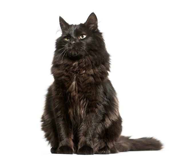 Schwarze mischlingskatze sitzend