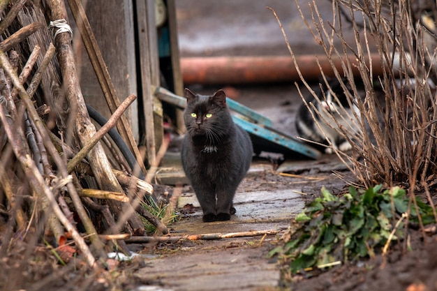 Schwarze obdachlose katze, die vögel beobachtet
