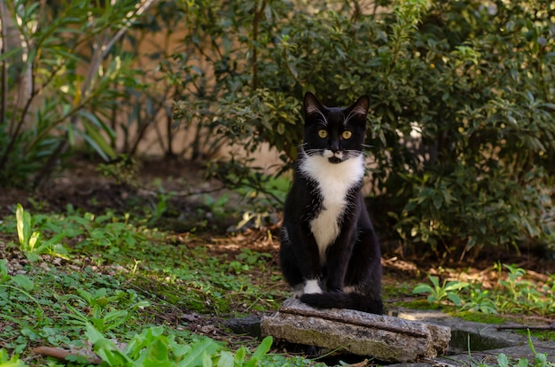 Schwarze obdachlose katze mit dem weißen hals, der auf dem ziegelstein im park sitzt. wildlife-konzept