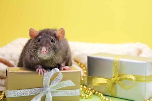 Schwarze ratte und die geschenke