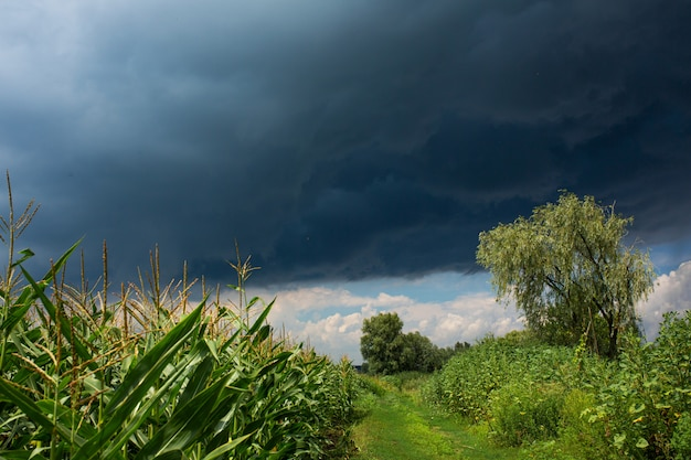 Schwarze regenwolke am himmel über einem grünen feld. reine naturlandschaft. regentage im sommer