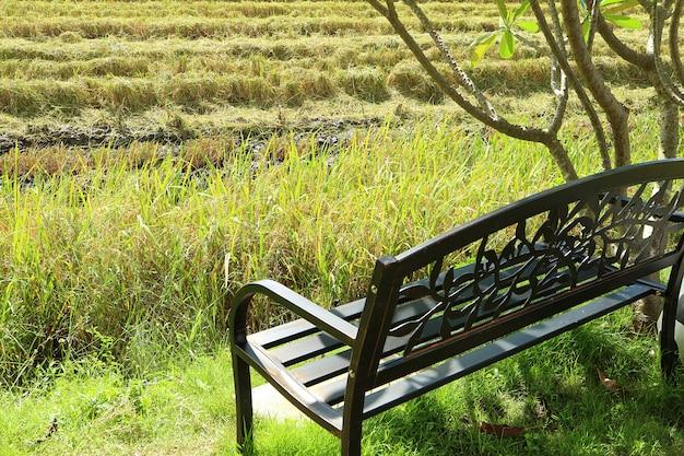 Schwarze schmiedeeisenbank unter dem baum durch paddy field in der erntezeit