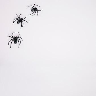 Schwarze spinnen auf weißem hintergrund