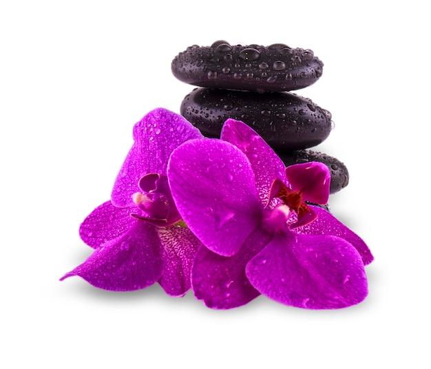 Schwarze steine und orchideenblüte