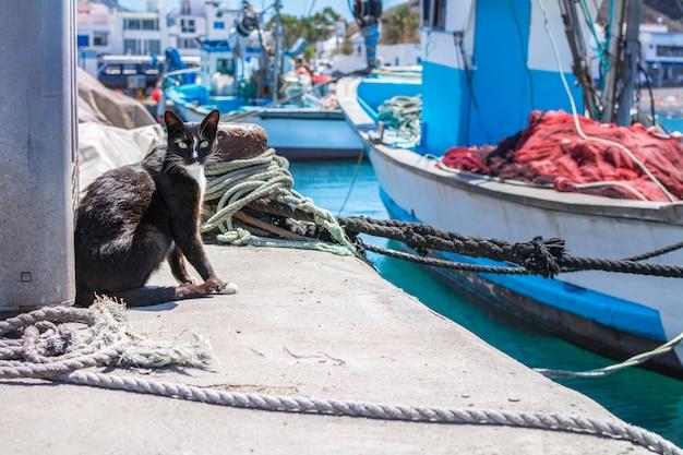 Schwarze streunende katze, die im hafen umgeben durch festmachenseile und boote sitzt.