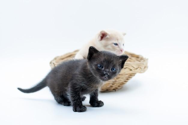 Schwarze und braune kätzchen im weidenkorb lokalisiert