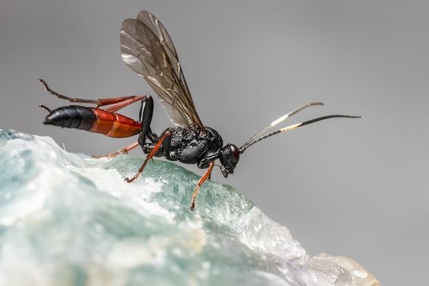 Schwarze und orange libelle auf weißer oberfläche