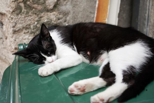 Schwarze und weiße griechische katze schläft auf der rückseite eines mülleimers