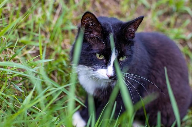 Schwarze und weiße schöne katzensitze im grünen gras im freien. junge grünäugige katze auf der wiese