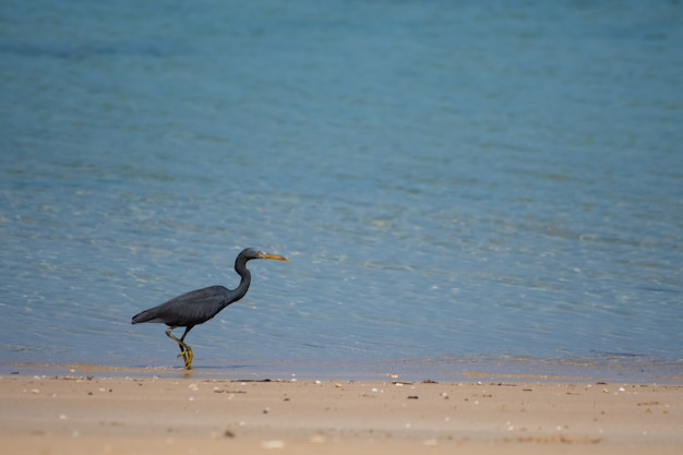 Schwarze vögel leben am meer.
