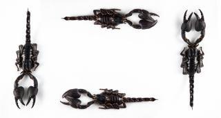 Schwarzen skorpion rahmen arachnid