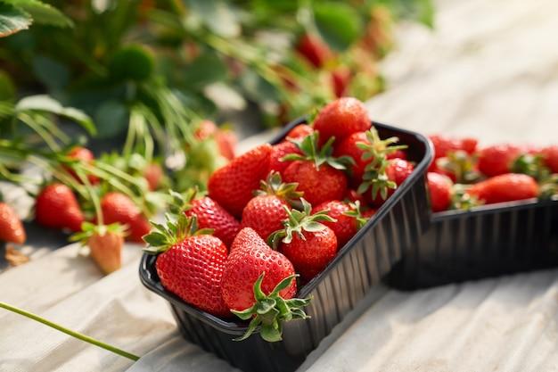 Schwarzer behälter voller frischer reifer erdbeeren