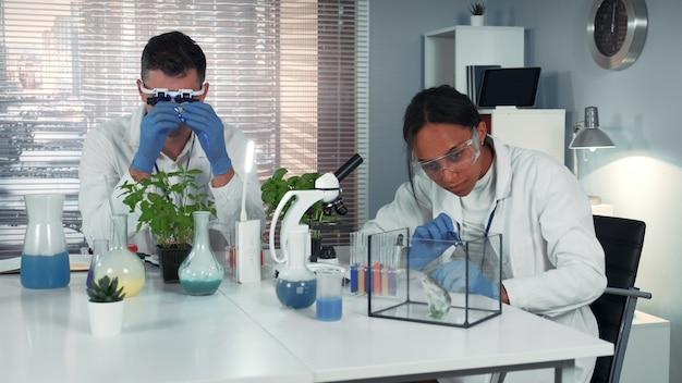 Schwarzer forscher, der chemische flüssigkeit auf pflanzenblatt fallen lässt und sie dann dem hamster gibt