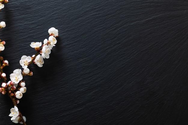 Schwarzer hölzerner hintergrund verzieren durch pflaumenknospenblüte