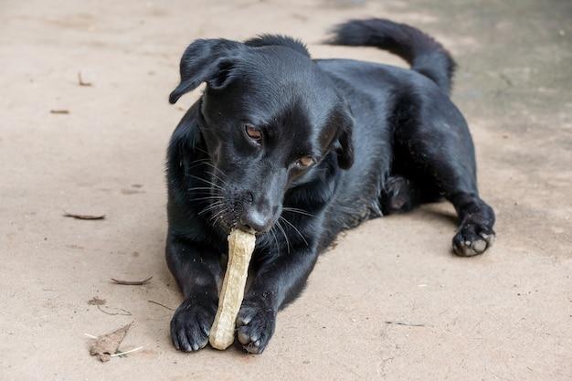 Schwarzer hund, der auf einem boden liegt und einen knochen zerfrisst