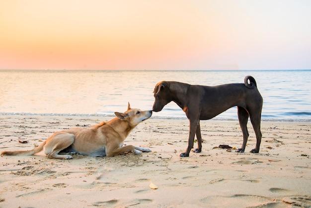 Schwarzer hund, der brown auf dem strand in der sonnenuntergangzeit küsst. dog lover paar konzept.