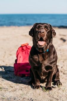 Schwarzer hund, der spaß am strand hat