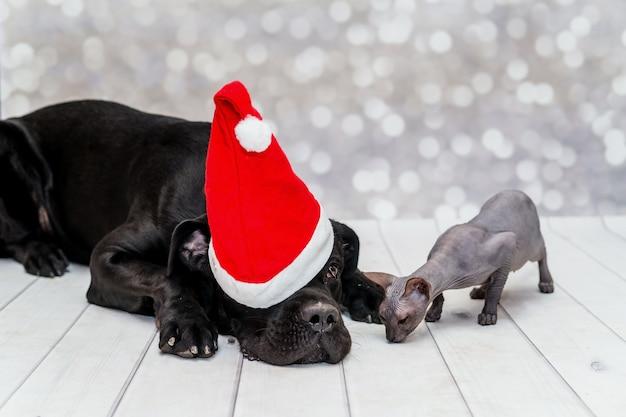 Schwarzer hund in weihnachtsmütze und ein kleines kätzchen