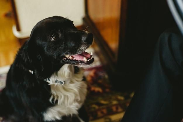 Schwarzer hund lachen