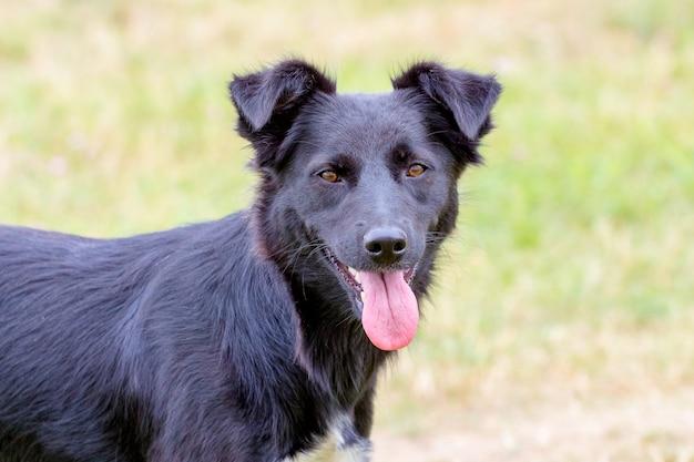 Schwarzer hund mit fokussiertem blick auf unscharfen hintergrund