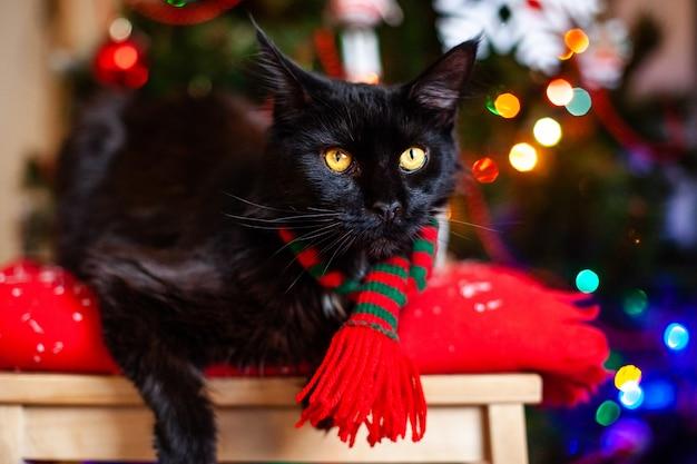 Schwarzer kleiner katze maine-waschbär mit rotem und grünem schal nahe weihnachtsbaum