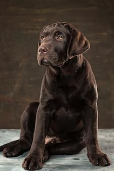 Schwarzer labrador-hund vor einem dunklen hintergrund genommen.