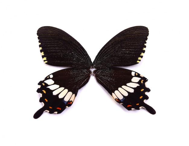 Schwarzer schmetterlingsflügel lokalisiert auf weiß