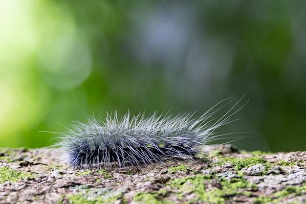 Schwarzer schneckenwurm der nahaufnahme auf baum in grüner natur.
