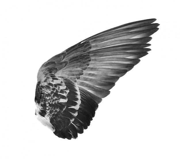 Schwarzer vogelflügel auf weißer wand