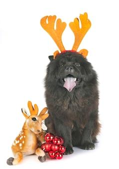 Schwarzes chow-chow in weihnachten