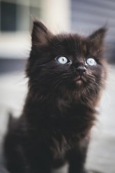 Schwarzes kätzchen auf weißer oberfläche