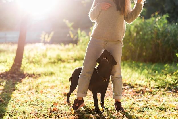 Schwarzes labrador, das seinen haustierinhaber im park betrachtet