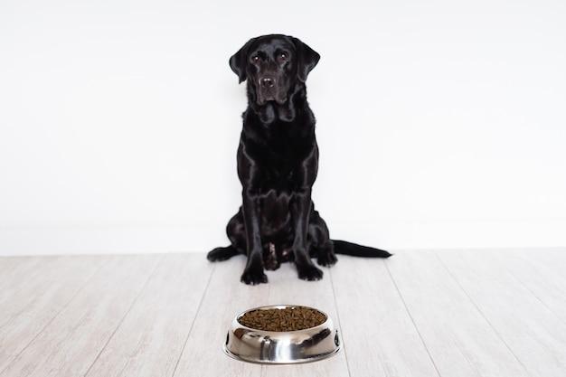 Schwarzes labrador zu hause essfertig sein lebensmittel in einer schüssel