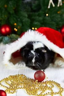 Schwarzes meerschweinchen unter neujahrsdekoration