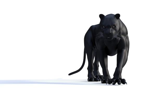 Schwarzes panther-isolat auf weißem hintergrund, schwarzer tiger
