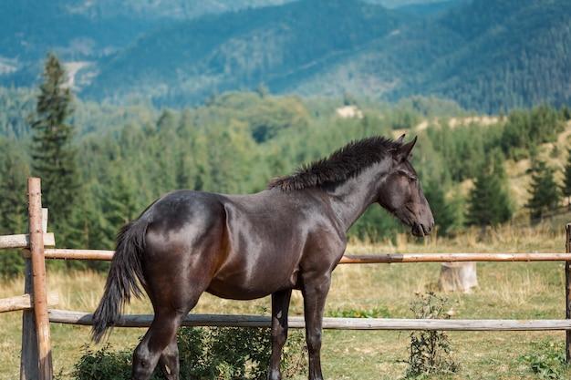 Schwarzes pferd in corral betrachtet eine schöne berglandschaft