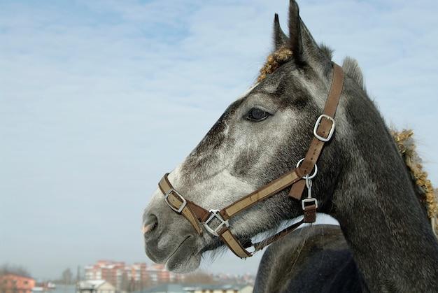 Schwarzes pferdeporträt auf winterschneelandschaft