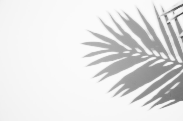 Schwarzes schattenblatt auf weißem hintergrund