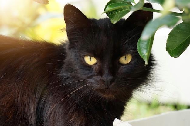 Schwarzes streukatzenporträt in der straße in der natur