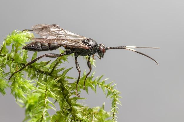 Schwarzes und braunes insekt auf grünem blattbaumzweig