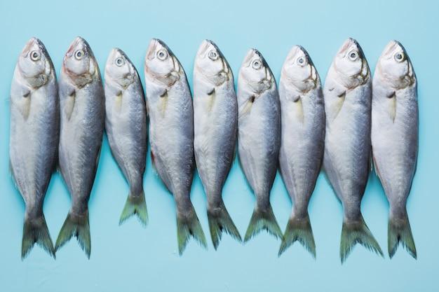 Schwarzmeermakrele auf pastellblau. fischmuster mit platz für text. von oben betrachten.