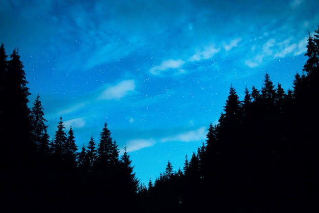 Schwarzwald mit bäumen über blauem nachthimmel mit vielen sternen. milchstraße im hintergrund