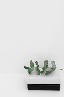 Schwarzweiss-deckungsbücher mit dem grünen zweig gegen weißen hintergrund