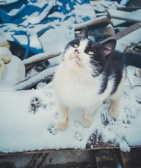Schwarzweiss-kätzchen im freien. schmutzige straßenkatze gehen durch die straßen. einsame obdachlose katze. straßenkatze im winter cay obdachlose katze auf der stadtstraße.