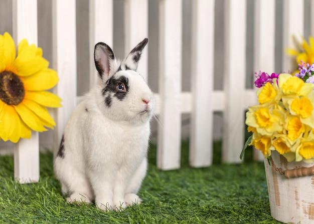 Schwarzweiss-kaninchen, das im garten unter den blumen sitzt