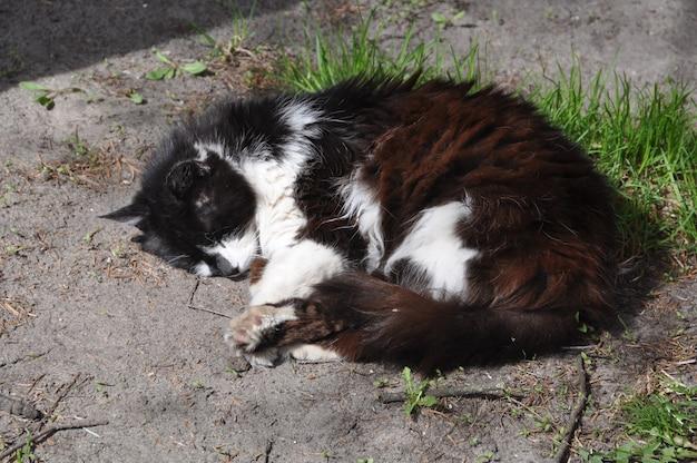 Schwarzweiss-katze, die auf dem boden liegt