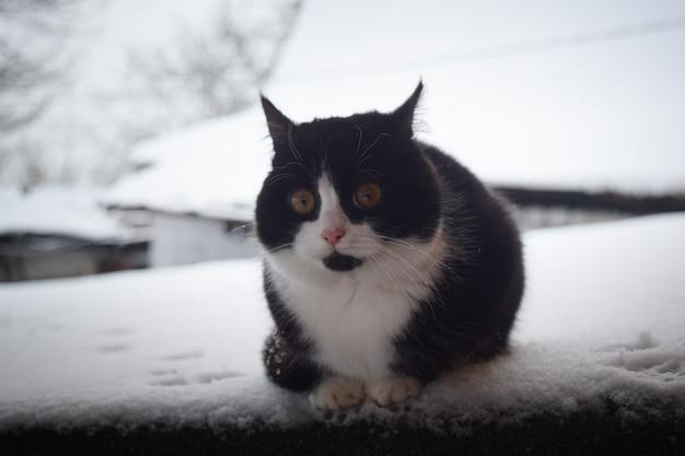Schwarzweiss-katze, die in den schnee geht.